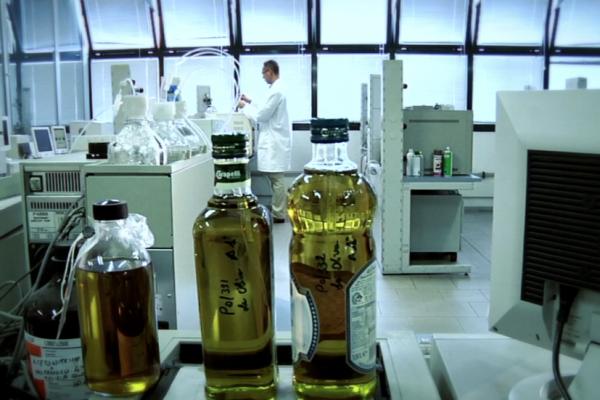 olive oil laboratory 2